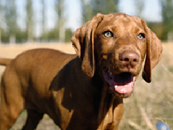 gastroenteritis_in_dogs-3_2009