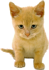 vaccinations_in_cats-1