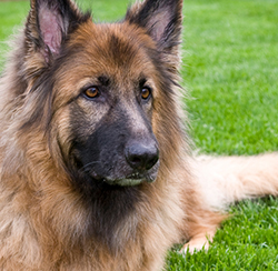 senior_dogs_recommendations_2_2009